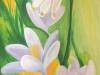 Frühlingserwachen Bild mit Schneeglöckchen, Märzbecher u.s.w.